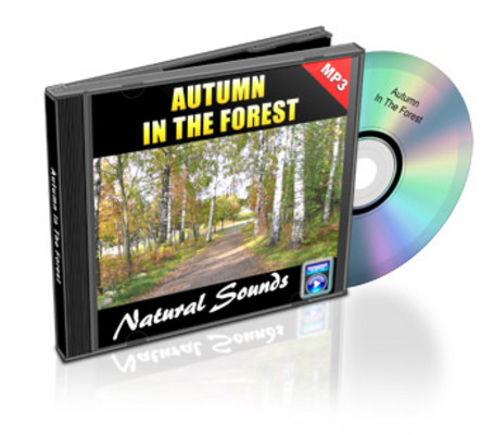 Product picture New Age Autumn In The Forest MP3 Audio